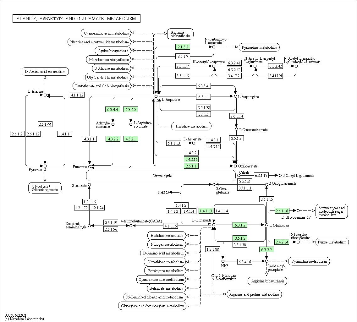 KEGG PATHWAY: Alanine, aspartate and glutamate metabolism