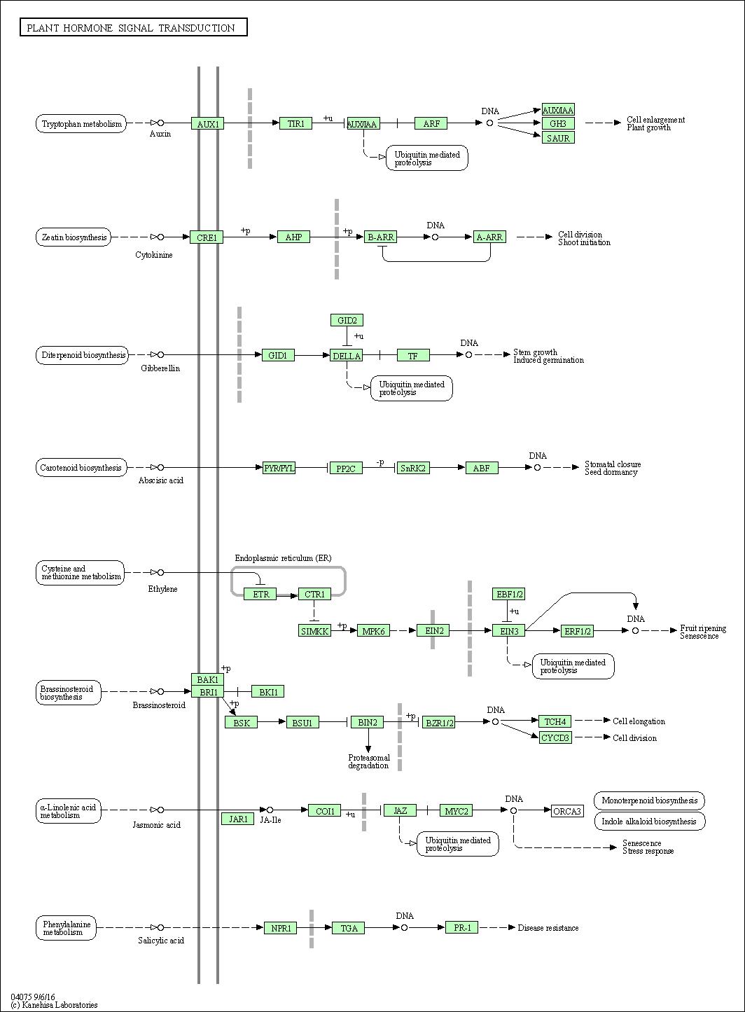 Kegg Pathway Plant Hormone Signal Transduction