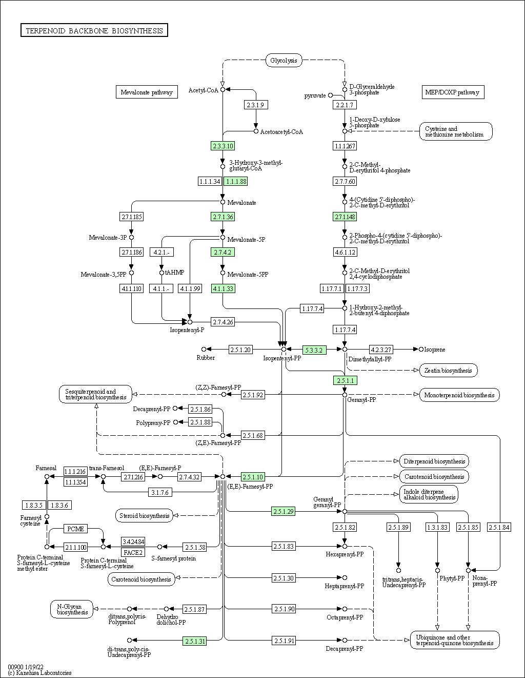 Dissertation literature review methodology