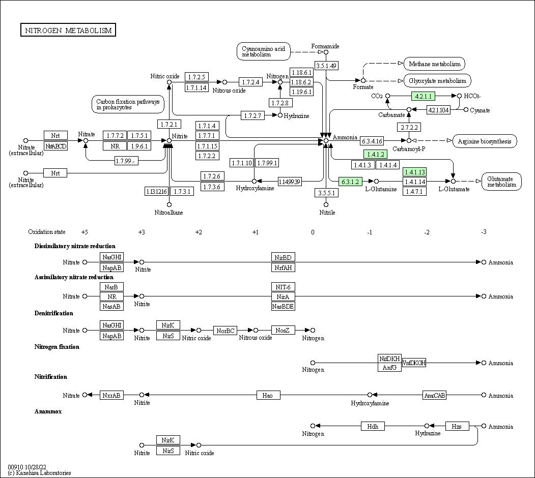 KEGG PATHWAY: Nitrogen metabolism - Luteimonas sp. 100111