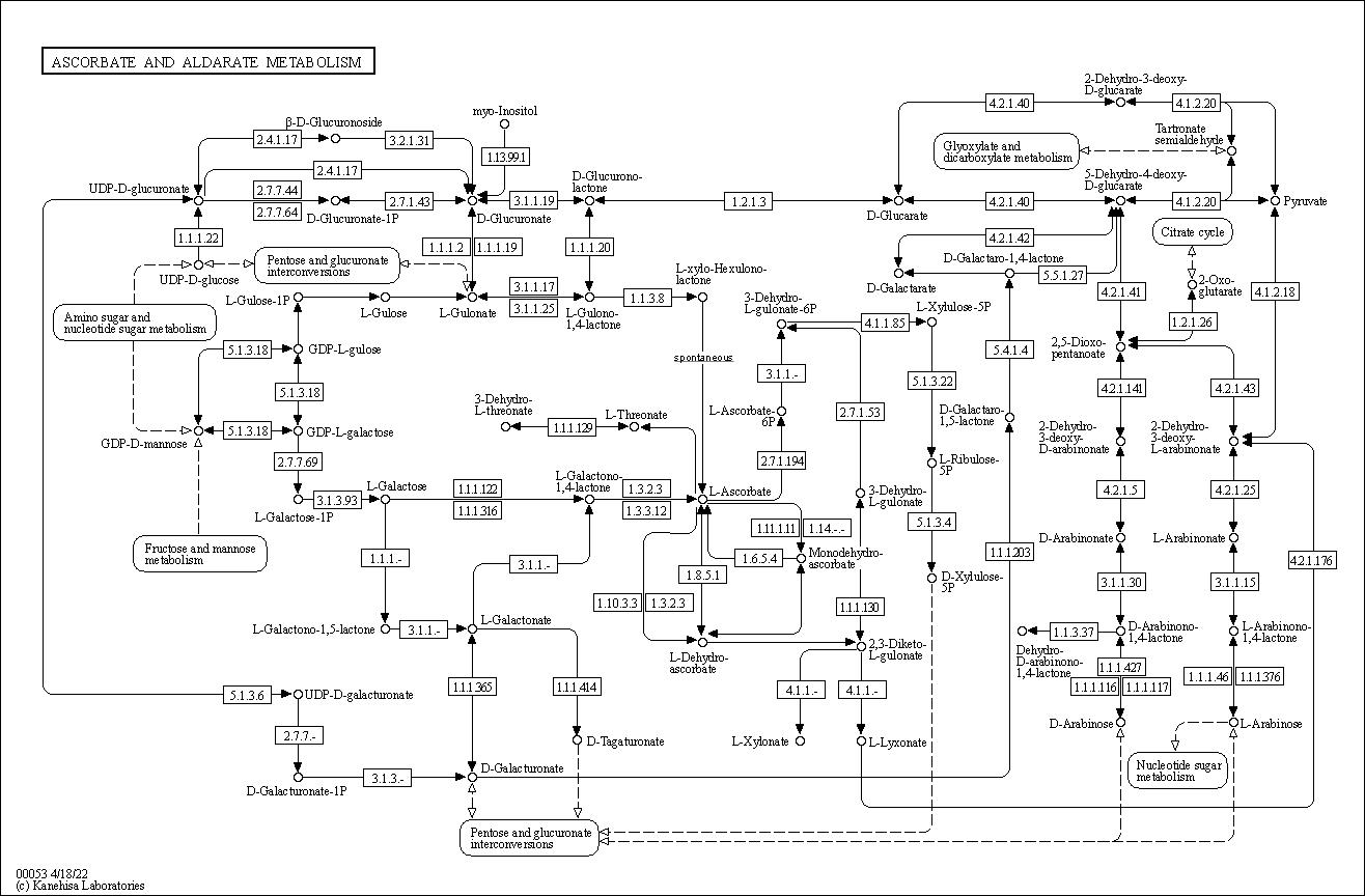 KEGG PATHWAY: Ascorbate and aldarate metabolism - Reference pathway