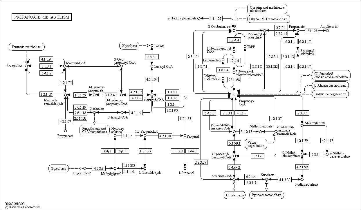 Kegg Pathway  Propanoate Metabolism